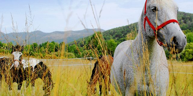 Horseback riding trip in Croatia | Raftrek Adventure Travel